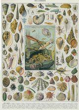 Imprimer le dessin en couleurs : Mollusques, numéro 454503