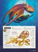 Imprimer le dessin en couleurs : Mollusques, numéro 4c3522db