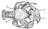 Imprimer le coloriage : Mollusques, numéro 671517