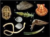Imprimer le dessin en couleurs : Mollusques, numéro b7f3858c