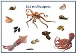 Imprimer le dessin en couleurs : Mollusques, numéro f3332b82