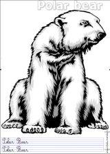Imprimer le dessin en couleurs : Ours, numéro 20941