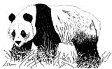 Imprimer le coloriage : Panda, numéro 104571