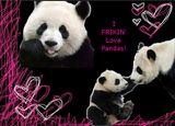 Imprimer le dessin en couleurs : Panda, numéro 108807