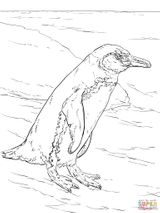 Imprimer le coloriage : Pinguoin, numéro 1268f75