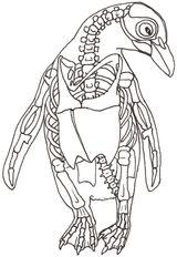 Imprimer le coloriage : Pinguoin, numéro 1913733b