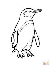 Imprimer le coloriage : Pinguoin, numéro 1a4b8cd1