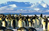 Imprimer le dessin en couleurs : Pinguoin, numéro 20f1970d