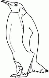 Imprimer le coloriage : Pinguoin, numéro 514010