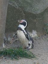 Imprimer le dessin en couleurs : Pinguoin, numéro 55be7f83