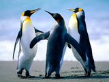 Imprimer le dessin en couleurs : Pinguoin, numéro 64ed7f09