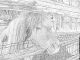 Imprimer le coloriage : Poney, numéro 18182