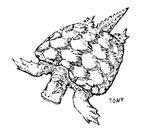 Imprimer le coloriage : Reptiles, numéro 10e12505