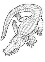 Imprimer le coloriage : Reptiles, numéro 114066
