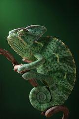 Imprimer le dessin en couleurs : Reptiles, numéro 119669