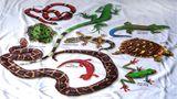 Imprimer le dessin en couleurs : Reptiles, numéro 119673