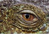Imprimer le dessin en couleurs : Reptiles, numéro 13bcc1b4