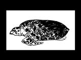 Imprimer le coloriage : Reptiles, numéro 163602
