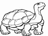Imprimer le coloriage : Reptiles, numéro 167672
