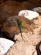 Imprimer le coloriage : Reptiles, numéro 183892