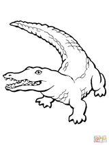 Imprimer le coloriage : Reptiles, numéro 187cb3fe