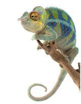 Imprimer le dessin en couleurs : Reptiles, numéro 1fd79328