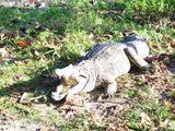 Imprimer le dessin en couleurs : Reptiles, numéro 210034