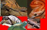 Imprimer le dessin en couleurs : Reptiles, numéro 22678