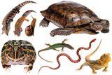 Imprimer le dessin en couleurs : Reptiles, numéro 22679