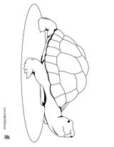 Imprimer le coloriage : Reptiles, numéro 23984