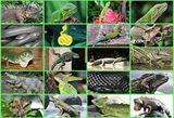 Imprimer le dessin en couleurs : Reptiles, numéro 24919