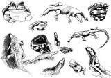 Imprimer le coloriage : Reptiles, numéro 25789