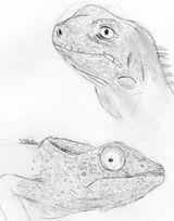 Imprimer le coloriage : Reptiles, numéro 268283