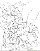 Imprimer le coloriage : Reptiles, numéro 27229