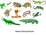 Imprimer le dessin en couleurs : Reptiles, numéro 337163
