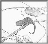 Imprimer le dessin en couleurs : Reptiles, numéro 59671