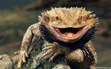 Imprimer le dessin en couleurs : Reptiles, numéro 684598