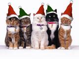 Imprimer le dessin en couleurs : Noël, numéro 499845
