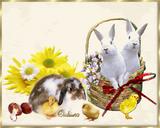 Imprimer le dessin en couleurs : Pâques, numéro 20703