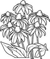Imprimer le coloriage : Nature, numéro 127773