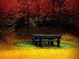 Imprimer le dessin en couleurs : Nature, numéro 156139