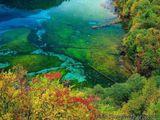 Imprimer le dessin en couleurs : Nature, numéro 20286