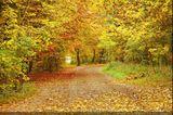Imprimer le dessin en couleurs : Nature, numéro 22305