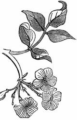 Imprimer le coloriage : Nature, numéro 4813