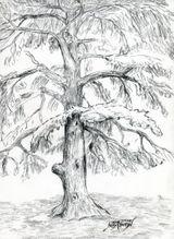Imprimer le dessin en couleurs : Arbres, numéro 11821