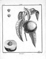 Imprimer le coloriage : Arbres, numéro 13562
