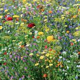 Imprimer le dessin en couleurs : Fleurs, numéro 10301beb