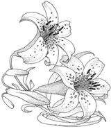 Imprimer le coloriage : Fleurs, numéro 1142