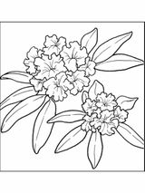 Imprimer le coloriage : Fleurs, numéro 1148