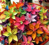 Imprimer le dessin en couleurs : Fleurs, numéro 11800